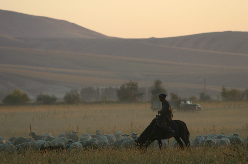 sheep hearder in Kazahkstan