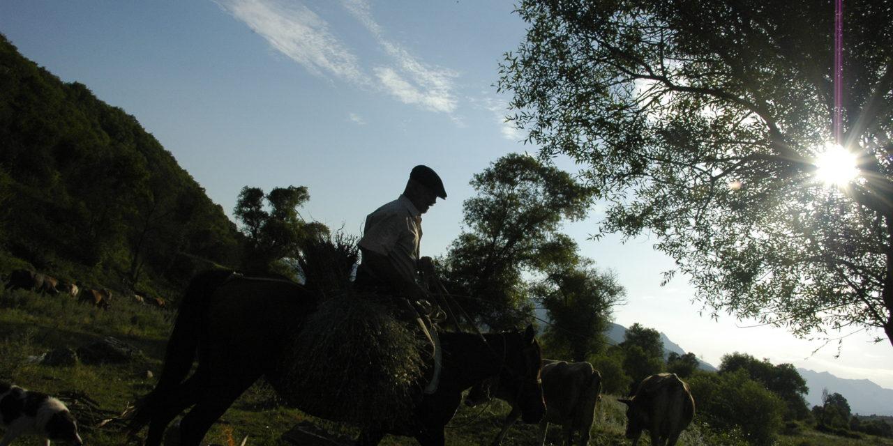 Photo of the Week: Armenian Cowboy