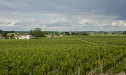 Photo of the Week: Vineyards of St. Émilion