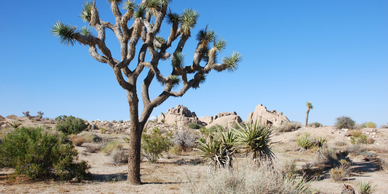Photo of the Week: Joshua Tree National Park