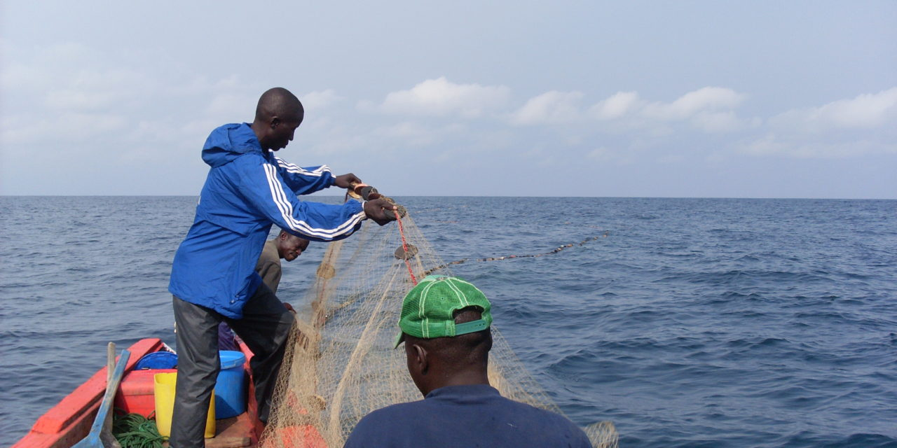 On the Water in Guinea: Part II