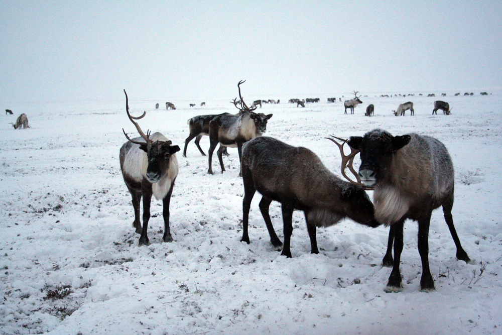 Nenets Russian Arctic