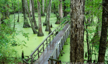 Scenes from the Natchez Trace [Photos]