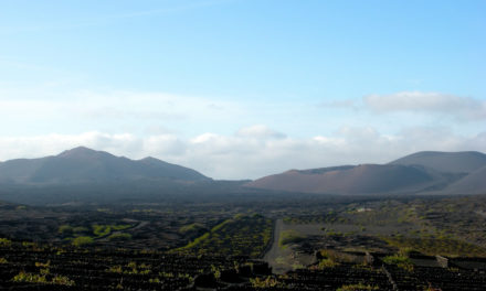Exploring Lanzarote as a Wine Destination