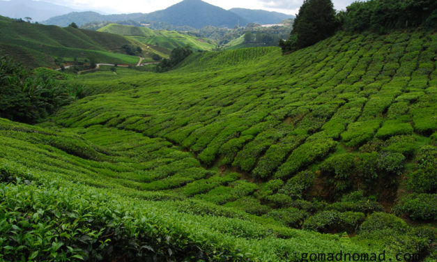 Photo of the Week: Tea field in the Cameron Highlands [Malaysia]