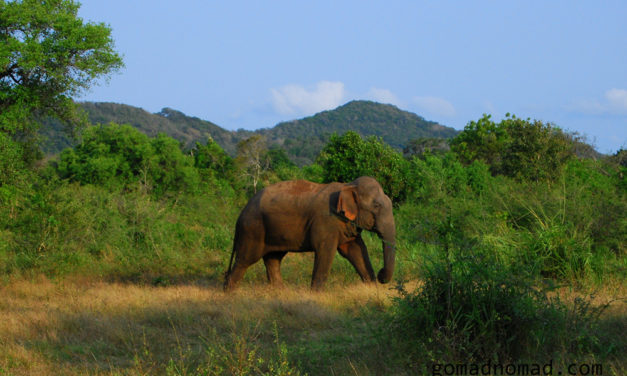 Photo of the Week: Sri Lanka Elephant in the Wild
