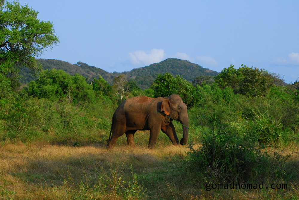 elephant in Habarana Eco Park (7.1)