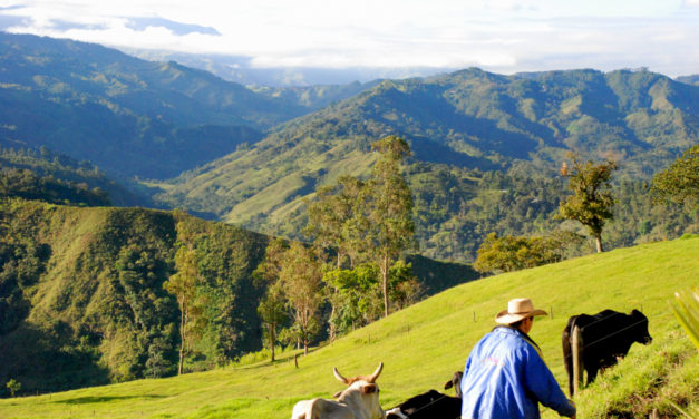 Chilling out in Colombia's Coffee Country
