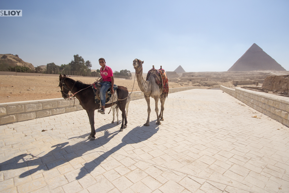 kid and camel at the pyramids of giza