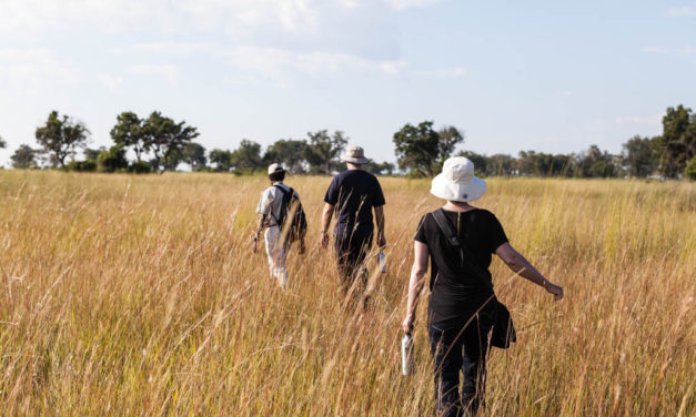 A Walking Safari in the Okavango Delta