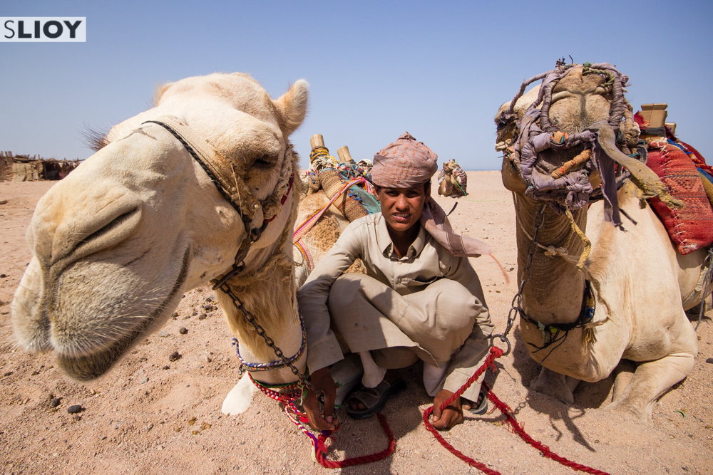 camel safari in the desert of hurghada