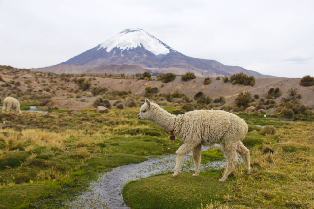 lauca national park Reasons to Visit Northern Chile
