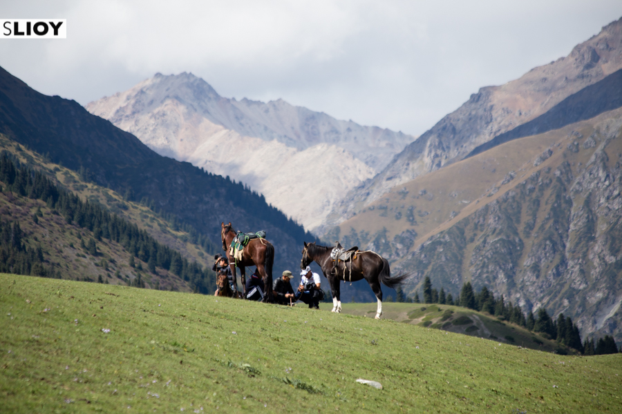 Horses on the Jailoo at Kyrchyn during the World Nomad Games 2016 in Kyrgyzstan