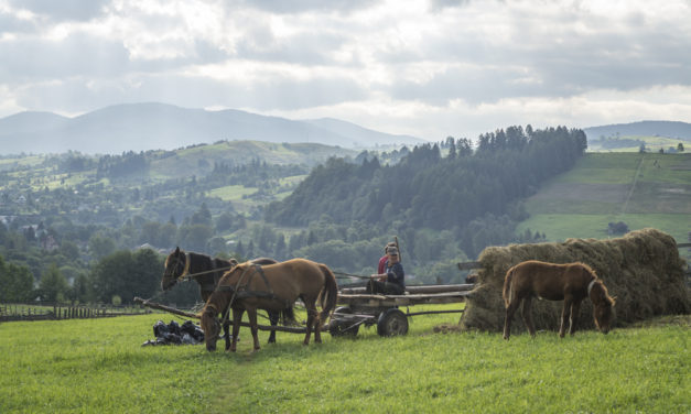 Photo of the Week: The Bucolic Beauty of the Carpathian Mountains of Ukraine