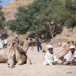 Photo of the Week: Keren Camel Market in Eritrea