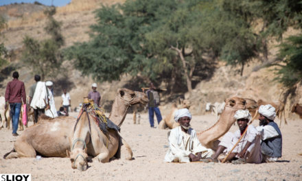 Photo of the Week: Keren Camel Market in Eritrea