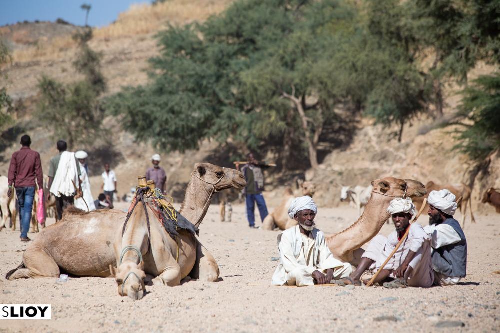 Keren Camel Market in Eritrea