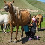 Introducing: Semi-Nomadic Life in Kyrgyzstan