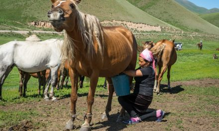 Introducing: Semi-Nomadic Life in Kyrgyzstan