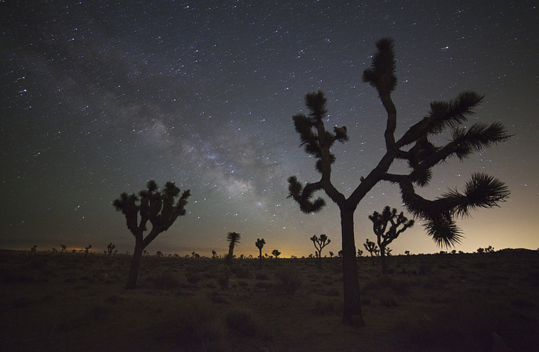 Milky Way - Joshua Tree National Park by Will Shieh