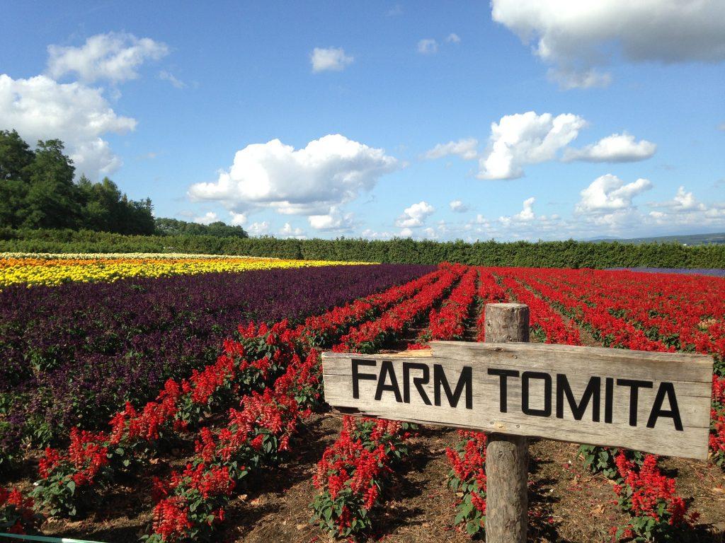 """alt=""""Tomita farm's flower fields blooming in Hokkaido"""""""