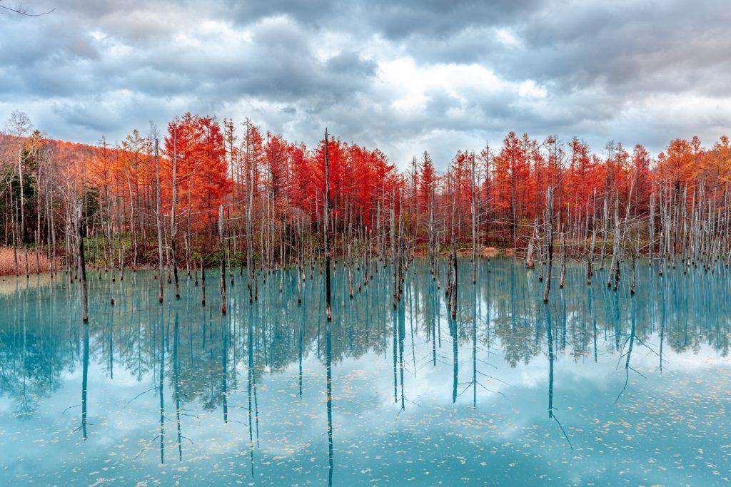 "alt=""Blue Pond and red trees in Biei, Hokkaido"""