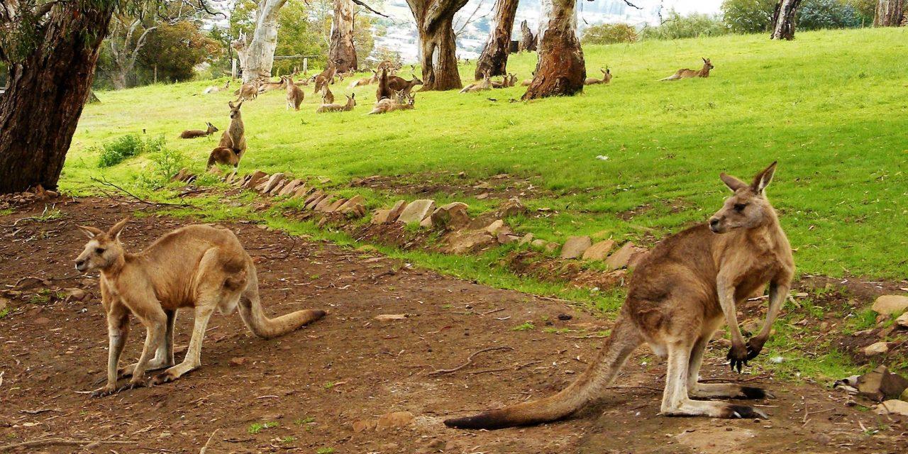 Top 14 Things to do in Hobart, Tasmania