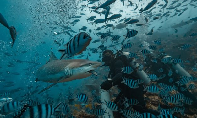 The Three Best Places to Dive Ethically with Sharks